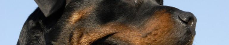 Aufwendungen eines Polizei-Hundeführers für den Diensthund sind Werbungskosten